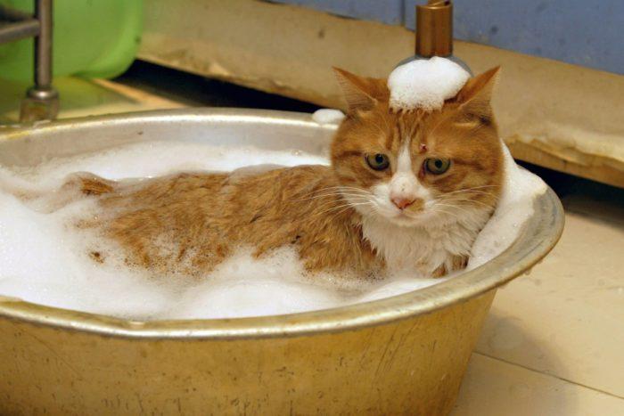 Котик в тазике
