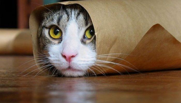 Кот завернут в бумагу