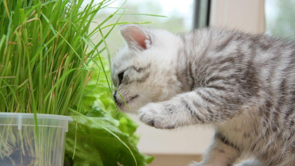 Котёнок и зелёная травка