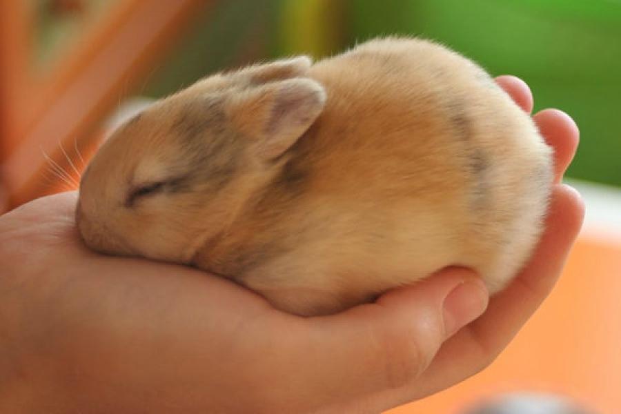 Крольчонок в руке