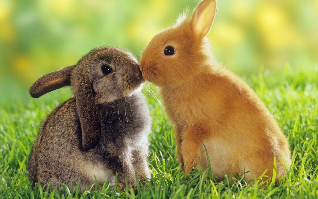 Кролик и крольчиха