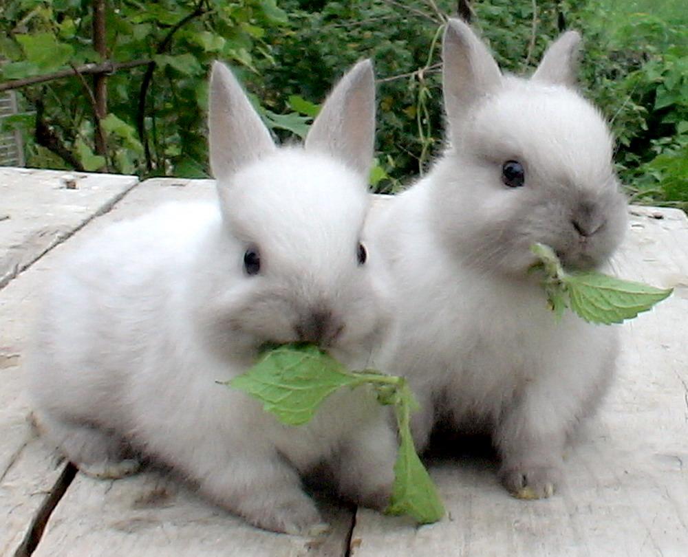 Кролики едят