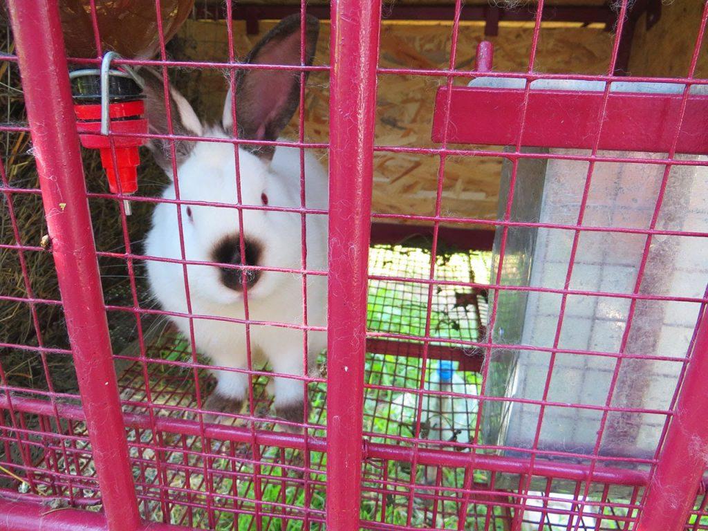 Металлическая клетка для кролика