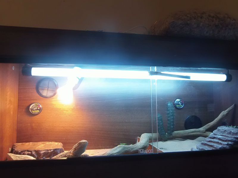 Террариум с ламповым освещением