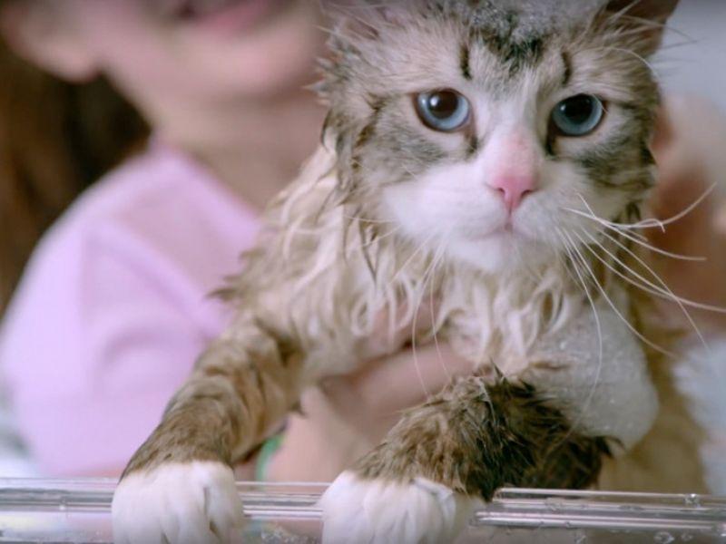 Как правильно мыть кошку — организуем водные процедуры для своего питомца