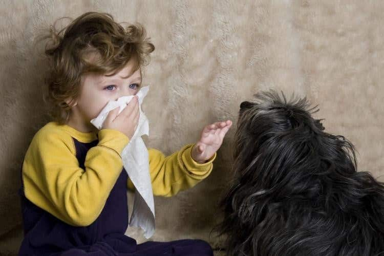 У ребенка аллергия на собаку